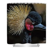 49- West African Crowned Crane Shower Curtain