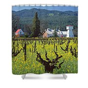 4b6394 Mustard In The Vineyards Shower Curtain