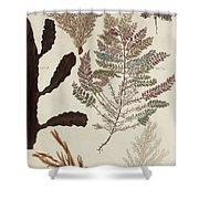 Aquatic Animals - Seafood - Algae - Seaplants - Coral Shower Curtain