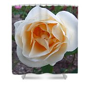 Australia - White Rose Flower Shower Curtain