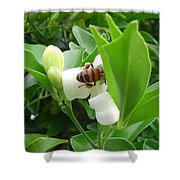Australia - The Bees Shower Curtain