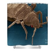 Bedbug, Cimex Lectularius, Sem Shower Curtain