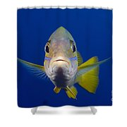 Bluestripe Snapper Shower Curtain