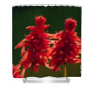Blurred Seasonal Flower With Dark Background Shower Curtain