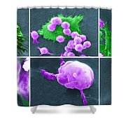 Cancer Cell Death Sequence, Sem Shower Curtain by Science Source