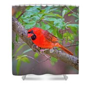 Cardinal Birds Hanging Out On A Tree Shower Curtain