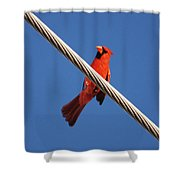 5- Cardinal Shower Curtain