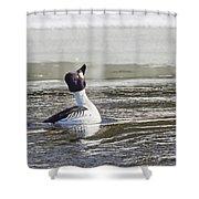 Common Goldeneye Shower Curtain