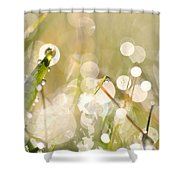 Dew In Grasses Shower Curtain