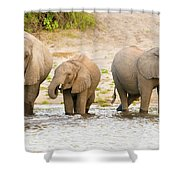 Elephants At The Bank Of Chobe River In Botswana Shower Curtain