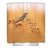 European Roller Coracias Garrulus Shower Curtain