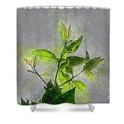 Fresh Growth Of Healthy Green Leafs  Shower Curtain