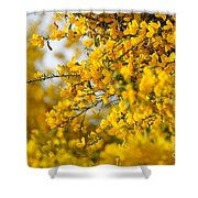 Ginestre Shower Curtain