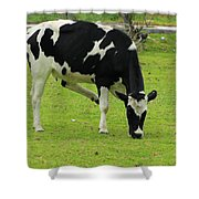 Holstein Cow On A Farm Shower Curtain