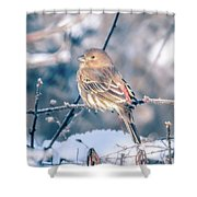 House Finch Tiny Bird Perched On A Tree Shower Curtain