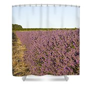 Lavender Fields Shower Curtain