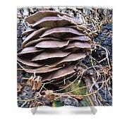 Mushroom Art Shower Curtain