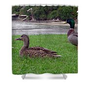 New Zealand - Mallard Ducks On The Grass Shower Curtain
