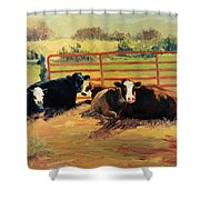 5 O Clock Cows Shower Curtain