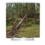 Old Forest In Kauppi Tampere Shower Curtain