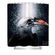 Red-billed Hornbill ,samburu, Kenya Shower Curtain
