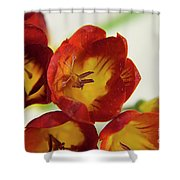 Red Freesia Shower Curtain