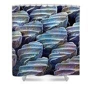 Sandbar Shark Skin, Sem Shower Curtain