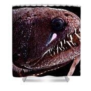 Threadfin Dragonfish Shower Curtain