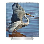 Tri Colored Heron Shower Curtain