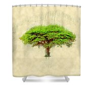 Umbrella Thorn Acacia Acacia Tortilis, Negev Israel Shower Curtain