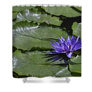 Water Lilies Shower Curtain