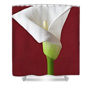 White Calla Shower Curtain by Heiko Koehrer-Wagner