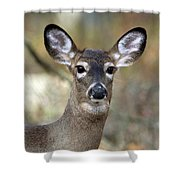White Tailed Deer Smithtown New York Shower Curtain