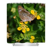 5 Yellow Flowers And A Buttefly Shower Curtain