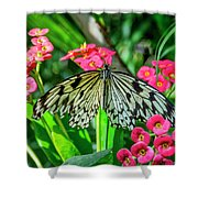 5050- Butterfly Shower Curtain