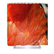 5060- Flamingo Shower Curtain