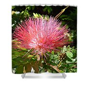 Australia - Red Caliandra Flower Shower Curtain