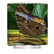 5113- Butterfly Shower Curtain