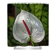 5129- Flower Shower Curtain