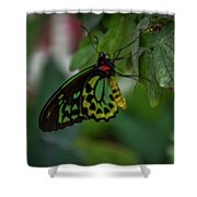 5156- Butterfly Shower Curtain
