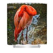 5182- Flamingo Shower Curtain