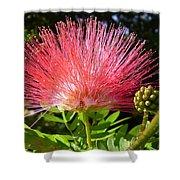Australia - Caliandra Red Flower Shower Curtain