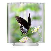 5276-001- Butterfly - Swallowtail Shower Curtain
