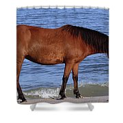 568a Shower Curtain