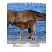 570a Shower Curtain