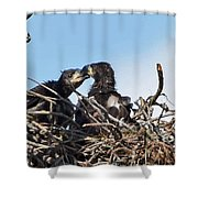 5760 Shower Curtain