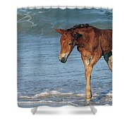 593a Shower Curtain