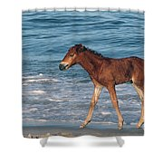 597a Shower Curtain
