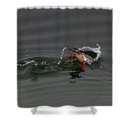 Red Breasted Merganser Fishing Shower Curtain
