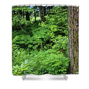 Alaska_00006 Shower Curtain